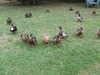 2006_0912chincoteague0039_1